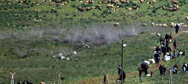 10 binler hayvanlarıyla birlikte Türkiye sınırında