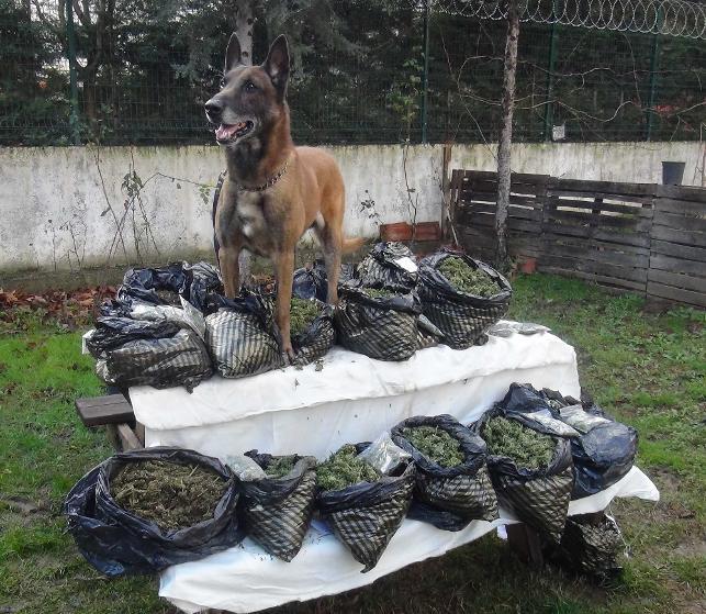 16 kilo esrarla yakalanan zanlıdan duyulmamış savunma