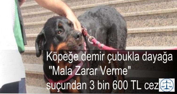 Köpeğe işkenceye Mala Zarar Verme Suçundan 3600 TL Ceza
